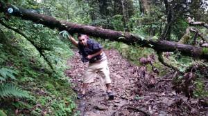 44. Wild Trail