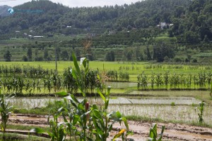 6. Terrace Farming