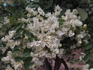 8. A Winter Bloom