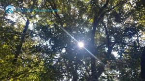 4. Pretty Sun
