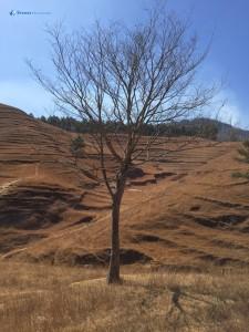 41.Tree