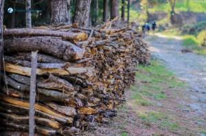 10. Firewood