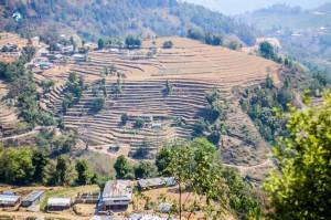 27. Terrace Farms