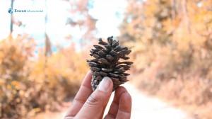 6. Pinecone