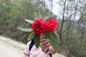 4. Flower for Pretty Lady