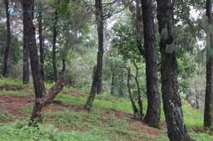 12. The peaceful jungle