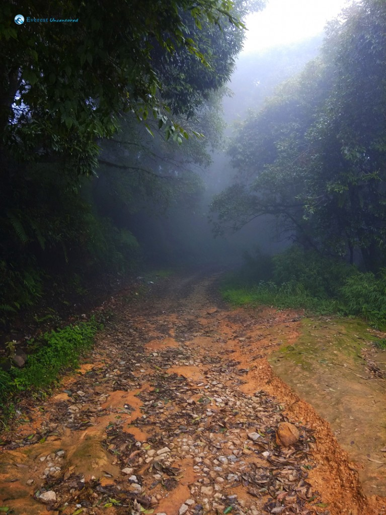 35. Into The Fog
