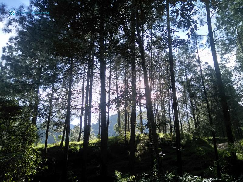 2. beautiful trees