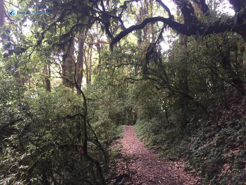 17.Dense Forest