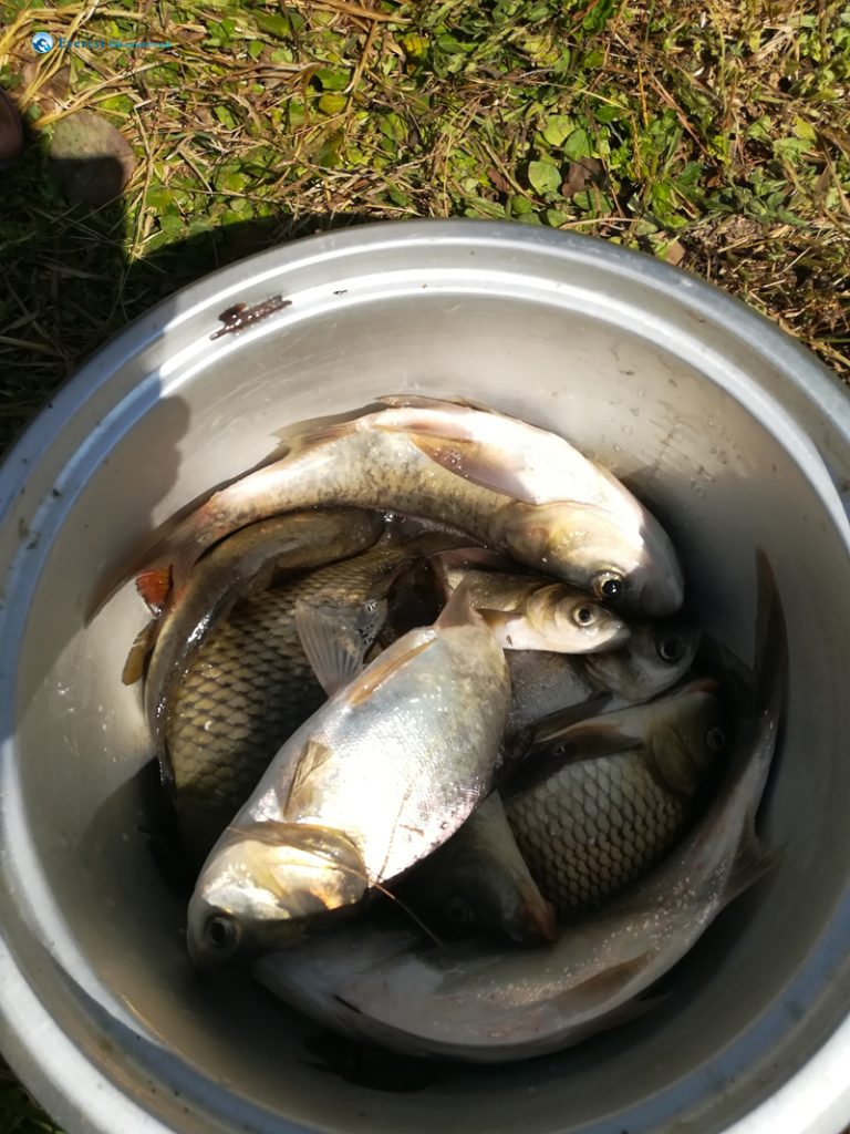 20. Fish