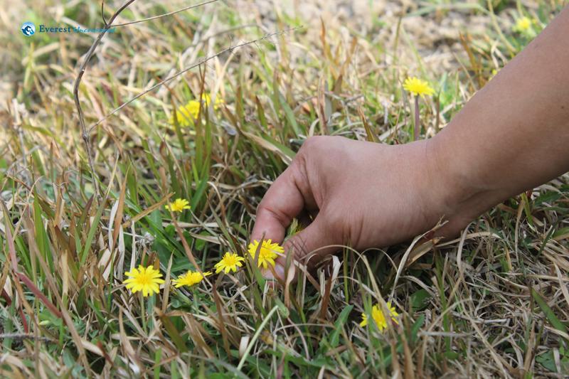 18. Wild Flower