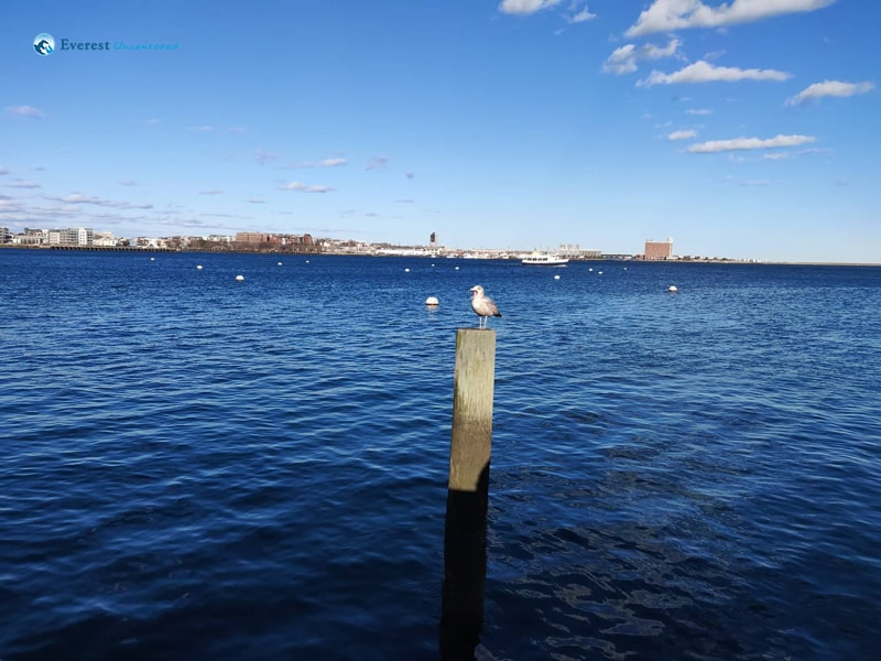 After 3 Months Of Long Chilling Winter, Finally At End Of The March, Got To Enjoy Serene Place Near Charles River, Boston In A Beautiful Sunny Day