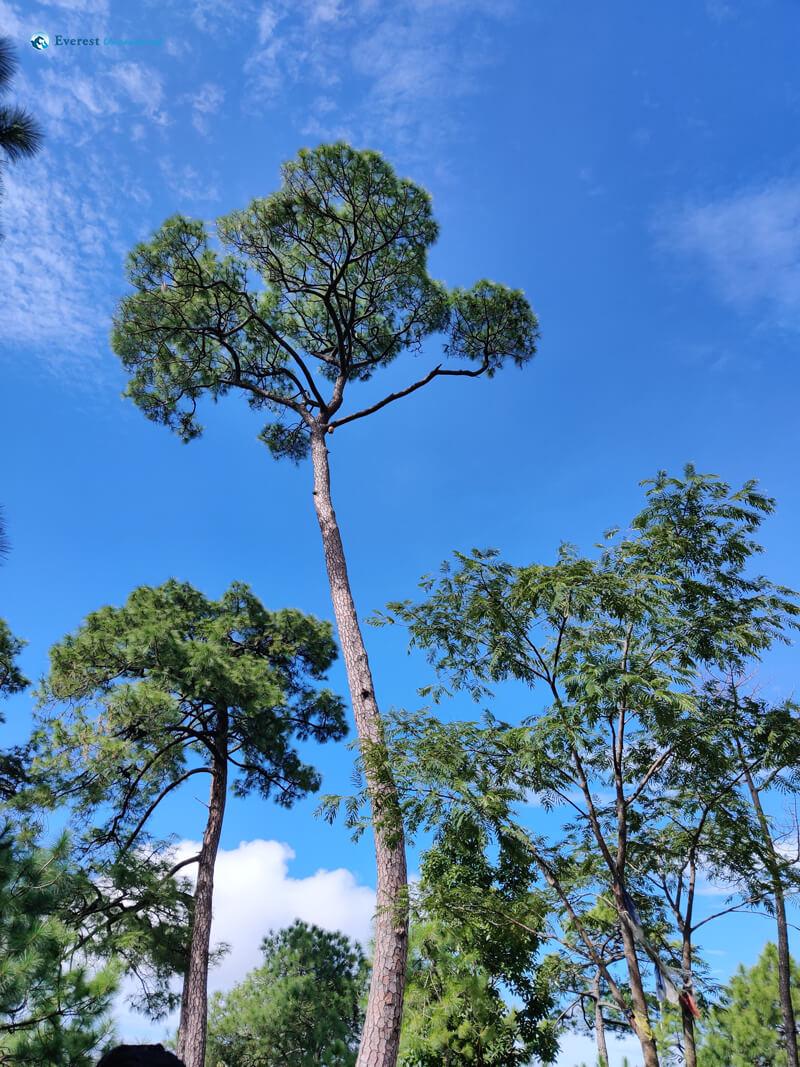 16 Aim High Like The Trees