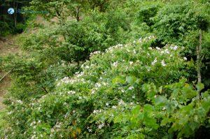 4. Blooming Flowers