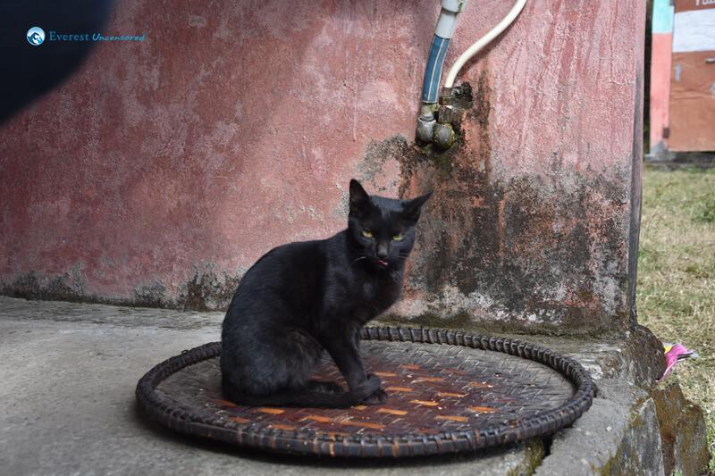 27. Scary Cat