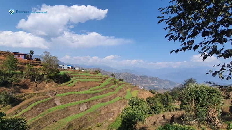 23. Terrace Farming
